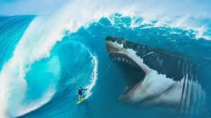 megalodon shark.  Shark What If Megalodon Sharks Didnu0027t Go Extinct Inside Shark YouTube