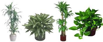 office plants no light. Indoor Plants Low Light Office No . M