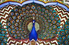 Peacock Pattern Cool Inspiration Design