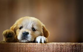 Free download 50 Cute Dogs Wallpapers ...