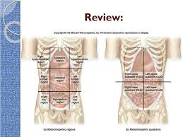 The human abdomen is divided into quadrants and regions by anatomists and physicians for the purposes of study, diagnosis, and treatment.12 the division into four quadrants allows the these terms are not used in comparative anatomy, since most other animals do not stand erect. Ppt Intro To The Human Body Directional Terms Planes Quadrants And Regions Powerpoint Presentation Id 2318417
