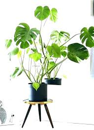 indoor plants safe for cats types of tall house pets large best houseplants home and common