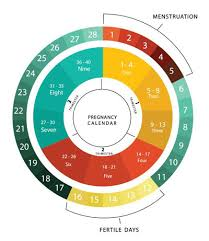 Typical Menstrual Cycle Chart What Is The Safe Period For Having Sex