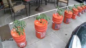 easy watering self watering bucket system growing in buckets you