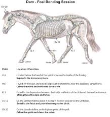 Acupressure For Mare Foal Connection Equine Wellness Magazine