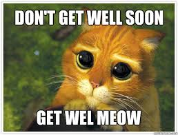 Don't get well soon get wel meow - Shrek Cat - quickmeme via Relatably.com