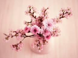 Nature Flowers HD Desktop Wallpaper