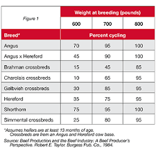 Cow Weight Chart Tips To Build Replacement Heifers Purina Animal Nutrition