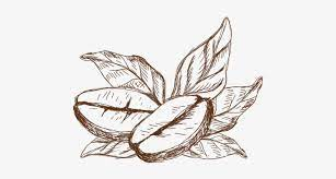 Elwisia and is about cartoon, cartoon tree, cartoon vector, coffee, coffee tree. Coffee Coffee Plant Drawing Png Transparent Png 500x500 Free Download On Nicepng