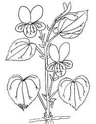 Disegni Fiori Da Colorare E Stampare Flowers Disegno Fiori