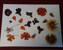 Flower Pressed Paper