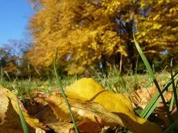 Bildergebnis für gedichte zum Oktober