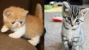 cute puppy and kitten best friends. Simple Cute Throughout Cute Puppy And Kitten Best Friends Y