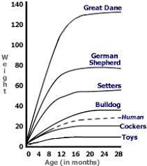 71 Most Popular Cocker Spaniel Weight Chart