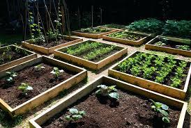 an open area vegetable gardening for beginners outdoor garden supplies popular patio vegetable garden outdoor designs