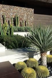 Small Picture Best 25 Desert plants ideas on Pinterest Desert landscaping