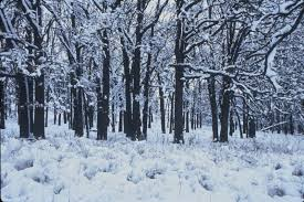 robert frost poems stopping by woods on a snowy evening images robert frost poems stopping by woods on a snowy evening whose woods