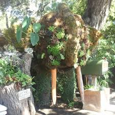 the great outdoors garden center austin texas beautiful plants everywhere