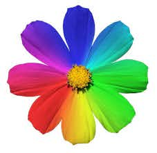 learn what flower colors symbolize