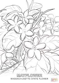 Small Picture Massachusetts State Flower coloring page Free Printable Coloring