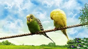1920x1080 hd wallpaper cute love bird colorful parrot hd wallpapers hd