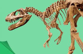 How Do You Figure Out How Dinosaurs Walked