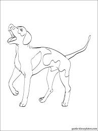 Kleurplaten Engels Coonhound Gratis Kleurplaten