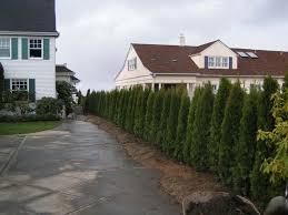 Fragrant Plants For Pathways  Fine GardeningGood Trees For Backyard
