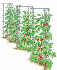 Amazoncom Trellises  Plant Support Structures Patio Lawn U0026 GardenClimbing Plant Trellis