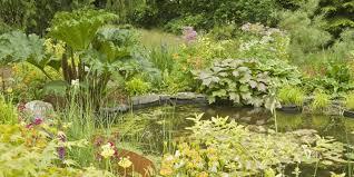 a wildlife pond