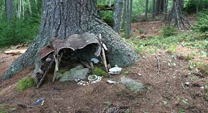 fairy house by a tree