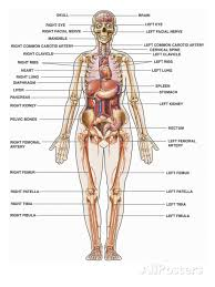 It is composed of many different types of cells that together create tissues and subsequently organ systems. Pin On Life Issues
