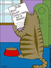 Image result for humor with fish and cat