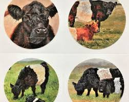 set of belted galloway cow stickers featuring my belted galloway cattle art premium glossy quality gift