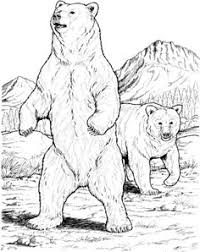 Small Picture Backyard Animals and Nature Coloring Books Free Coloring Pages