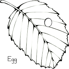 Small Picture butterfly egg coloring page Preschool Crafts Pinterest