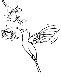 Small Picture New Animal Coloring Pages