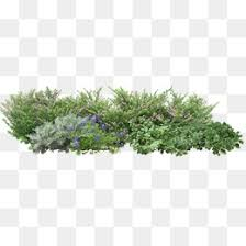 grass png. Interesting Grass 19625 Free Grass PNG Images Intended Png