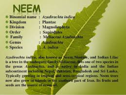 n medicinal plants and their uses pictures n diy medicinal plants on n medicinal plants and their uses pictures
