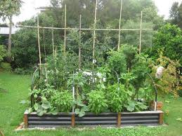 herb garden design in raised bed
