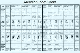 Tooth Organ Meridian Chart Meridian Tooth Chart Teeth To Organs Relationship News