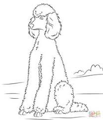 Small Picture Poodle Coloring Page Poodle Dog pattern and Embroidery