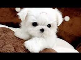 cute dogs and puppies.  And Cute Dogs  Cutest Dog In The World White Puppies Videos Compilation  2017 Throughout And U