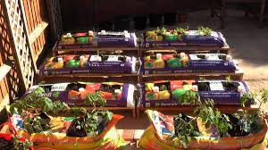 Our Suburban Garden  Vegetable Garden Gardens And Garden IdeasContainer Garden Ideas Vegetables