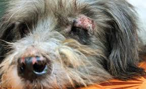 How to tackle pet skin disorders with holistic care - Veterinary ...