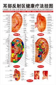 Acupuncture Auricular Points Chart Free Shipping 66 48cm Chinese English Ear Reflex Zone Wall