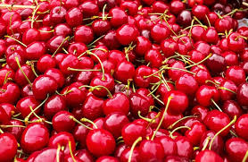 Planting Cherry Trees: North Star and Montmorency Cherry Trees - The Self  Sufficient HomeAcre