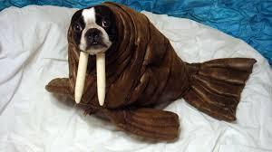 echo the walrus