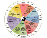 Meet The Chinese Body Clock Is This Why Youre Waking Up At