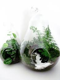 269 best terrariumini gardens images on glass terrarium containers
